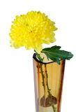 Yellow flower in a glass vase Stock Image