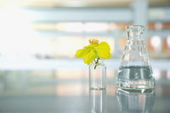 Yellow flower with glass vial and science flask in laboratory Royalty Free Stock Image