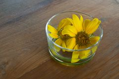 Yellow flower in glass. Yellow flower in glass on wood Stock Image