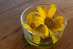 Yellow flower in glass. Yellow flower in glass on wood Royalty Free Stock Images