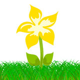 Yellow flower in the grass Stock Photos