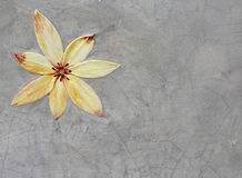 Yellow flower on the gray concrete texture background. Space for ideas. Royalty Free Stock Photos