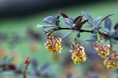 Yellow flower on green Stock Photos