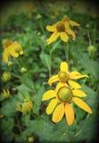 Yellow flower in green garden Stock Photo