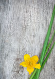Yellow flower and green grass on the old wood Royalty Free Stock Image