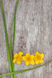 Yellow flower and green grass on the old wood Stock Images