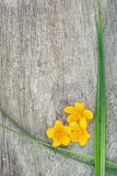 Yellow flower and green grass on the old wood Royalty Free Stock Photography