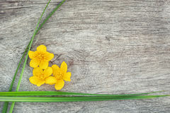 Yellow flower and green grass on the old wood Royalty Free Stock Images