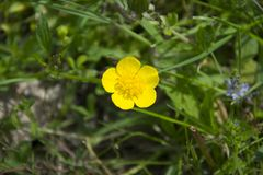 Yellow flower and green leaf Stock Photography