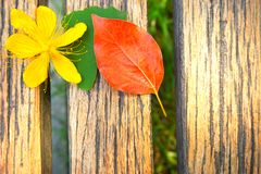 Yellow flower, Green leaf and red leaf on a wooden table Stock Photography