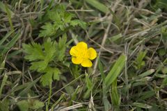 Yellow flower and green leaf Royalty Free Stock Photo