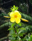 Yellow flower on the green leaves HD wallpaper background. With the blured background stock photos