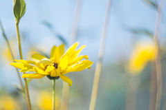 Yellow Flower With Green Leaves Tilt Shift Lens Photography Stock Images