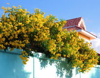 Yellow flower on green wall Stock Photography