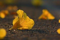 Yellow flower on the ground Stock Photos