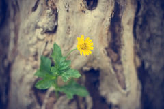 Yellow flower growing on dead tree, soft focus, vintage color stock images
