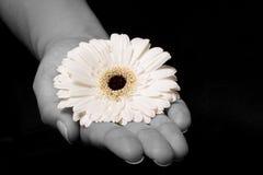 Yellow flower in hand Stock Photo