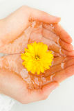 Yellow flower in hands Stock Images