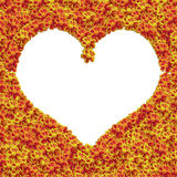Yellow flower heart frame Royalty Free Stock Image