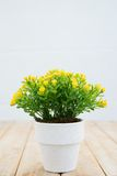 Yellow flower for home decoration Royalty Free Stock Photography