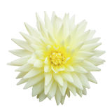 Yellow flower isolated Royalty Free Stock Image