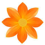 Yellow flower. Royalty Free Stock Image