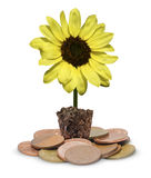 Yellow flower lamp on coin Stock Photo
