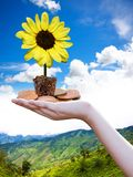 Yellow flower lamp on coin, View background Royalty Free Stock Photo