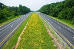 Yellow flower-lined state highway in rural Virginia Stock Image