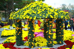 Yellow flower look fresh in flower festival Stock Image