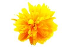 Yellow flower macro. Macro image of yellow flower, isolated on white background Stock Image