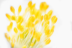 Yellow flower macro photography Royalty Free Stock Photos