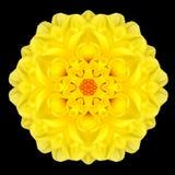 Yellow Flower Mandala Kaleidoscope Isolated on Black Stock Photography