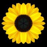 Yellow Flower Mandala Kaleidoscope Isolated on Black Stock Image