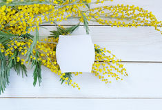 Yellow flower mimosa on white wooden table Stock Images