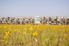 Yellow flower and modern Dutch housing Stock Photos