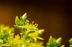 Yellow flower moss stock photo