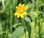 Yellow, Flower, Outside, Blurry background. royalty free stock images