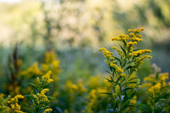 Yellow flower naer a swamp stock image