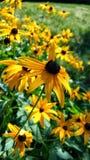 Yellow flower. Nice yellow flower Stock Image