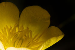 Yellow flower. An yellow flower in the night Stock Photos