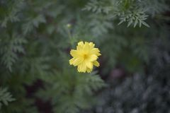 Yellow flower in a park. A bokeh of a Yellow flower in a park Stock Image