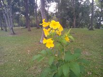 Yellow flower in the park. stock photography