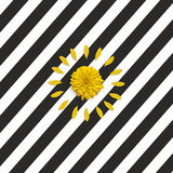 Yellow flower and petals on the black white abstract striped background. Stock Images