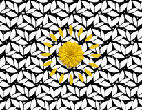 Yellow flower and petals on the black white floral background. Royalty Free Stock Image