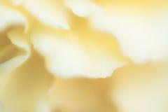 Yellow flower petals Stock Photos