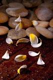 Yellow flower petals with yellow  stone on wood Royalty Free Stock Photos