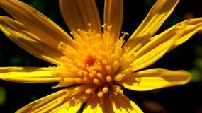 Yellow Flower Photo Stock Photo