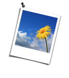 Yellow flower. Postcard. Yellow flower.  Blue and white Postcard Royalty Free Stock Images