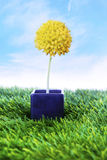 Yellow flower on the pot Royalty Free Stock Photography